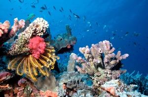Fauna Maldivas 2